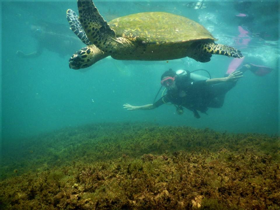 PRaticar mergulho é a possibilidade de conhecer um mundo diferente