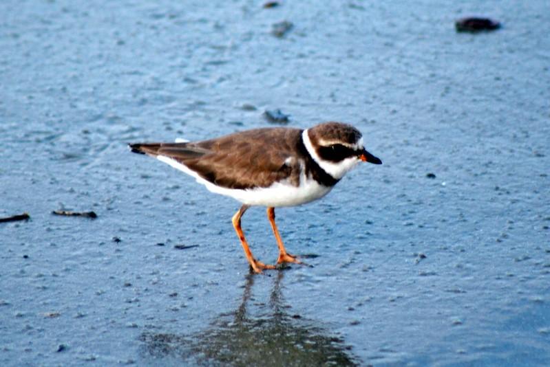 Birdwatching no Litoral Norte: explore a biodiversidade da Mata Atlântica